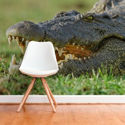 Фотообои с крокодилом для комнаты мальчика подростка  Узоры на Стене