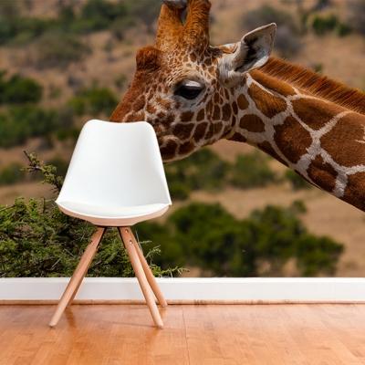 Фотообои с животным. Жираф в естественных условиях  Узоры на Стене
