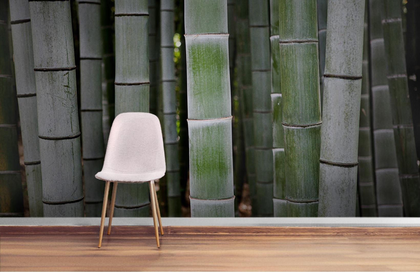 Фотообои с бамбуковыми тропическими зарослями Узоры на Стене