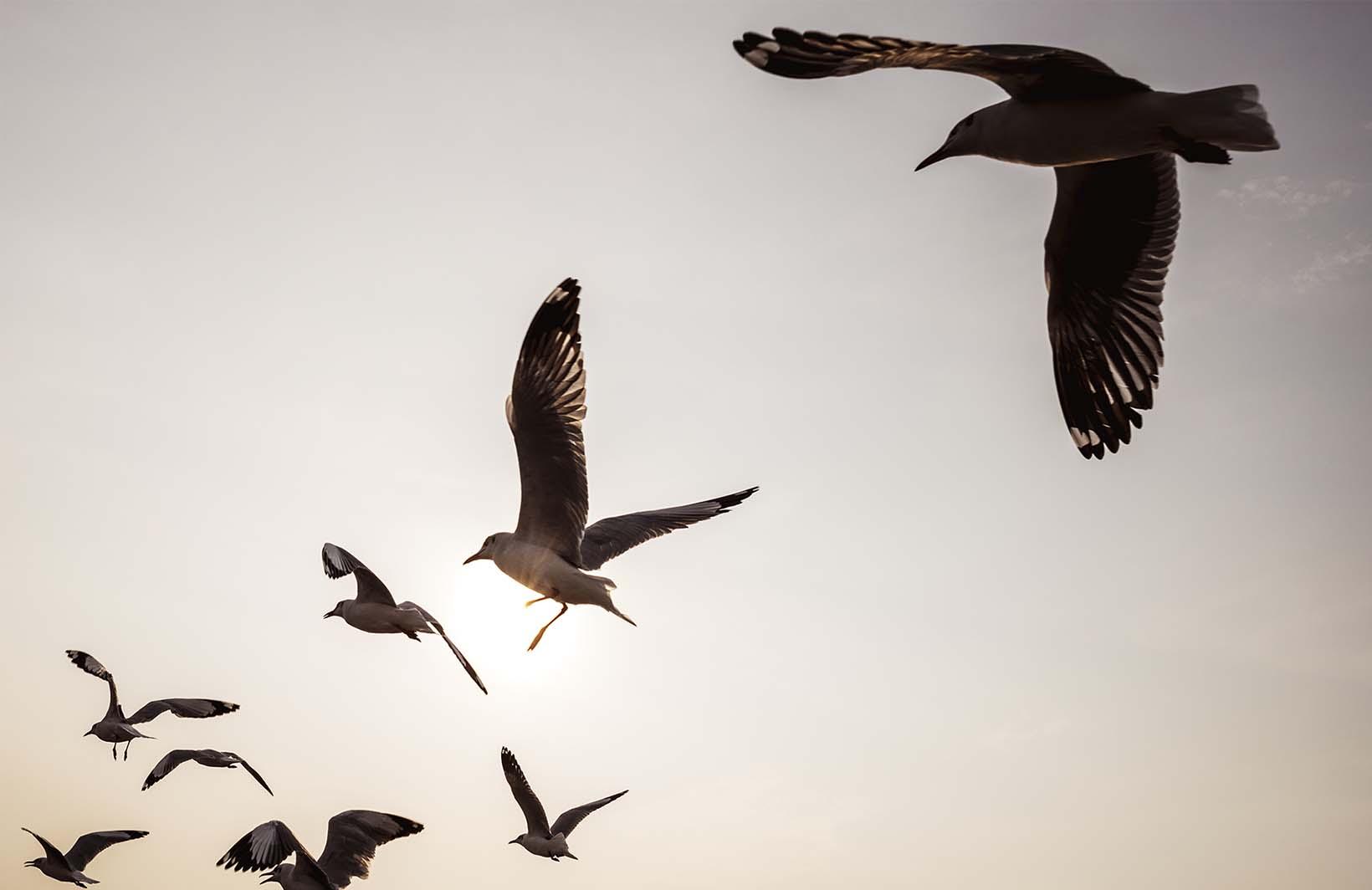 Модные фотообои с птицами в вечернем небе Узоры на Стене