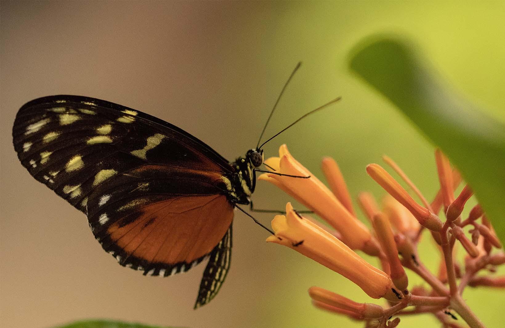 Милые фотообои с бабочкой на цветке на стену в детскую комнату девочки Узоры на Стене