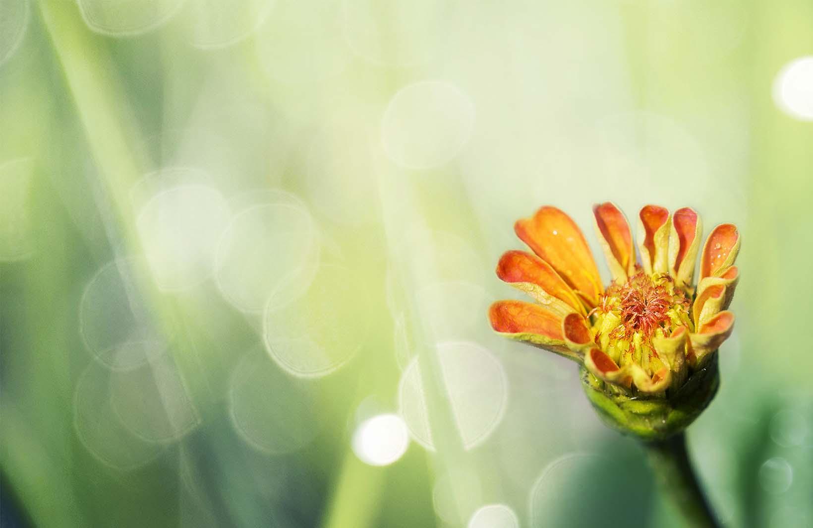 Фотообои с летним цветком в лучах солнца для спальни девочки Узоры на Стене