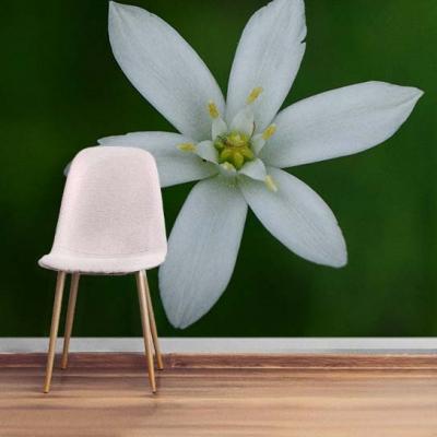 Фотообои с крупным белым цветком на стену в современном интерьере  Узоры на Стене
