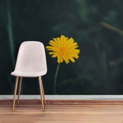 Фотообои с Цветущим Одуванчиком  Узоры на Стене